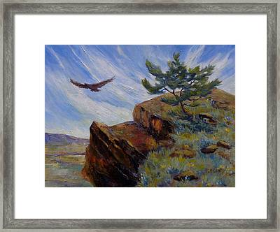 Red Tail Hawk Framed Print by Peggy Wilson