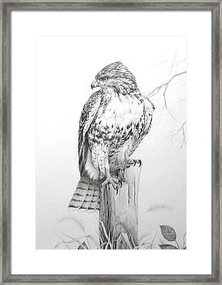 Red Tail Hawk Framed Print by Teresa Einsig