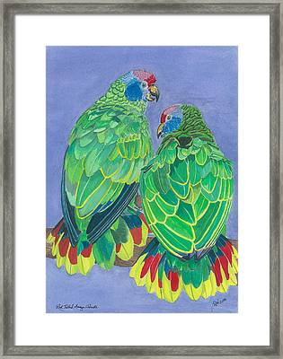 Red Tailed Amazon Parrots Framed Print by Anthony Purification