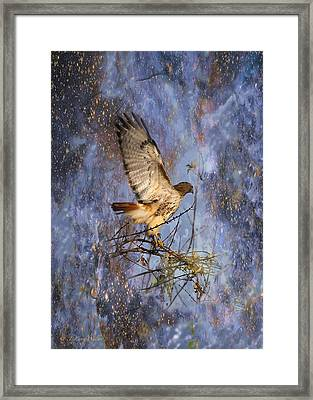 Framed Print featuring the digital art Red-tailed Hawk Applauding The Early Morning Sunrise by J Larry Walker