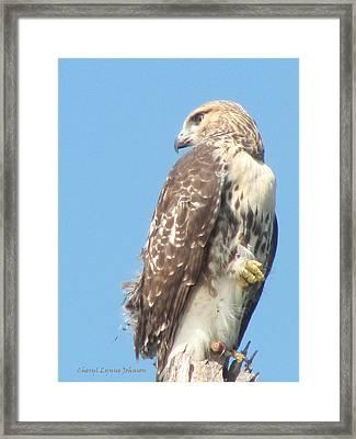 Red Tailed Hawk Framed Print by Cheryl Lynne  Leech-Johnson