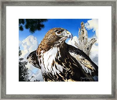 Da141 Red Tailed Hawk By Daniel Adams Framed Print
