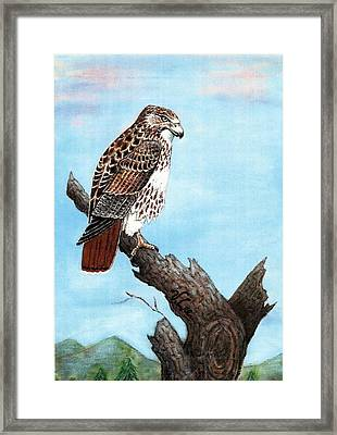 Framed Print featuring the painting Red Tailed Hawk by VLee Watson