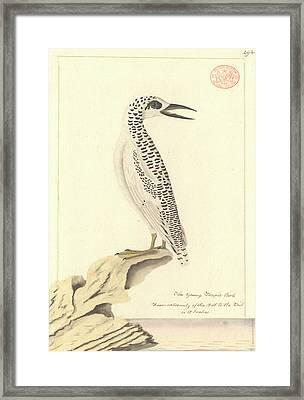 Red-tailed Tropicbird Framed Print