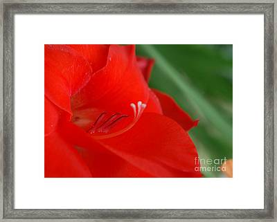 Red Temptation Framed Print
