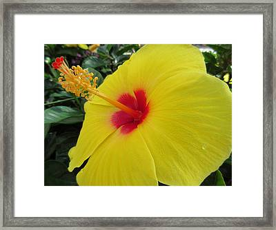 Red Throat With Dew Drops Framed Print