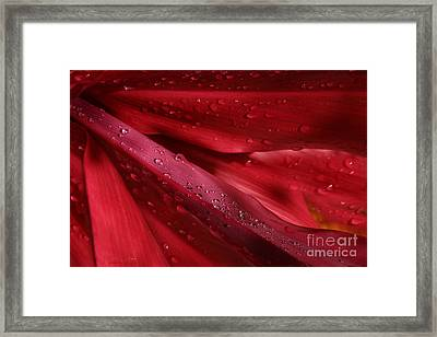 Red Ti The Queen Of Tropical Foliage Framed Print by Sharon Mau