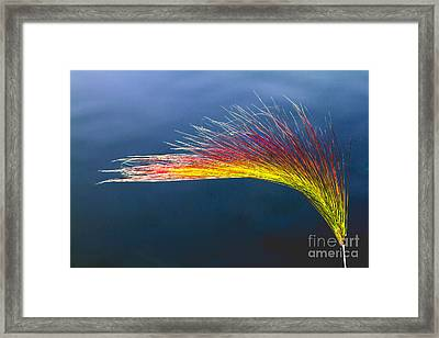 Red Tipped Grass Framed Print by Robert Bales