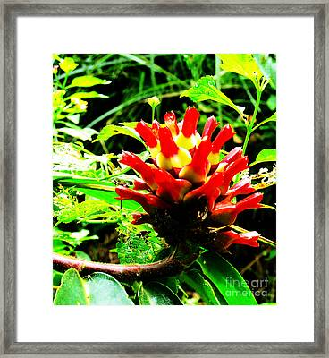 Red Torch Ginger Flower One Framed Print by Tina M Wenger