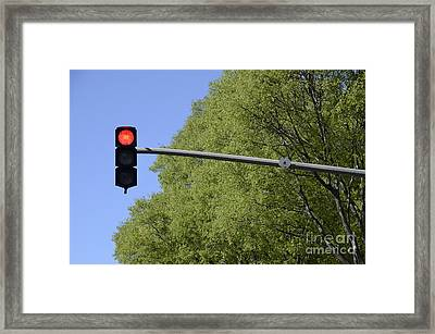 Red Traffic Light By Trees Framed Print by Sami Sarkis