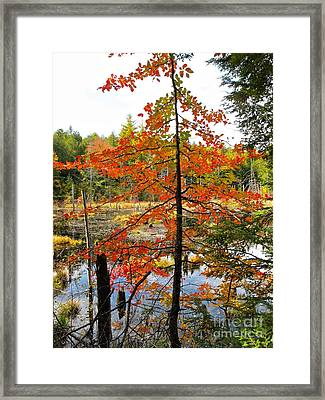 Red Tree At Waters Edge Framed Print by Linda Marcille