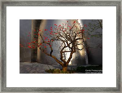 Red Tree  Framed Print by Gandz Photography