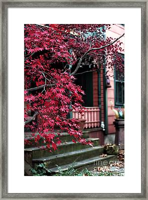 Red Tree Framed Print by John Rizzuto