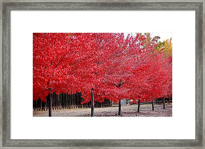 Red Tree Line Framed Print