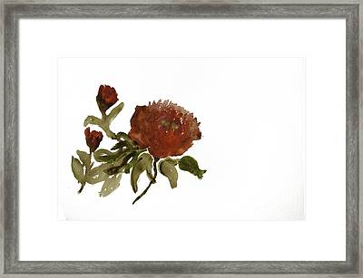 Red Tree Peony Framed Print by Lesley Rigg