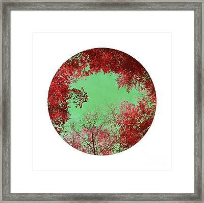 Red Trees Framed Print by Angela Bruno