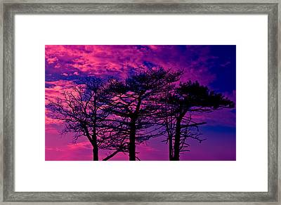 Framed Print featuring the photograph Red Trees by David Stine