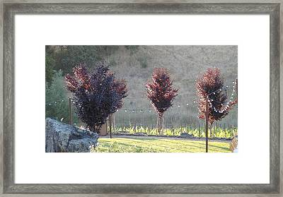 Red Tree's Framed Print by Shawn Marlow