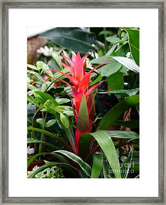 Red Tropical Flower 5d22436 Framed Print by Wingsdomain Art and Photography