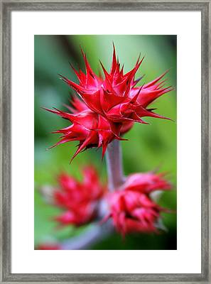 Red Tropical Flowers Framed Print by Karon Melillo DeVega