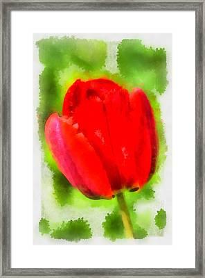 Red Tulip Aquarell Framed Print by Matthias Hauser