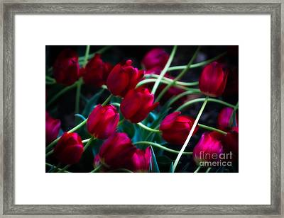 Red Tulip River Framed Print by Doug Sturgess