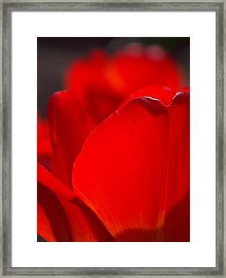 Petal's Edge Framed Print