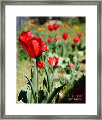 Red Tulips 5d22406 Framed Print by Wingsdomain Art and Photography