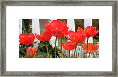 Framed Print featuring the photograph Red Tulips At Fence by Christina Verdgeline