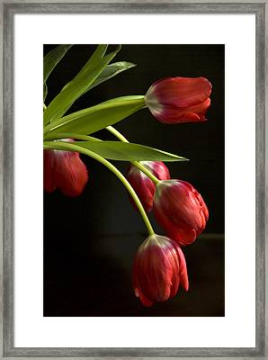 Red Tulips Framed Print by Cindy Rubin