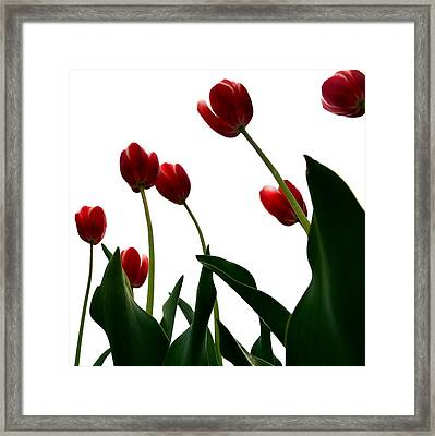 Red Tulips From The Bottom Up Vl Framed Print by Michelle Calkins