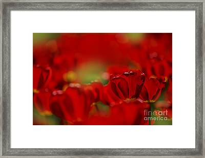 Red Tulips Framed Print by Nailia Schwarz
