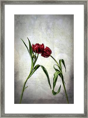 Red Tulips On A Letter Framed Print by Joana Kruse