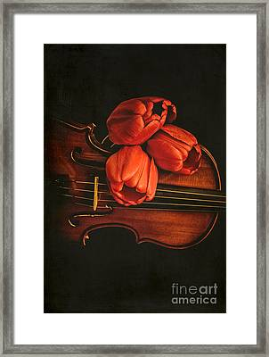 Red Tulips On A Violin Framed Print
