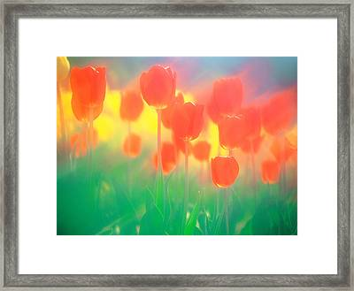 Red Tulips Framed Print by Panoramic Images