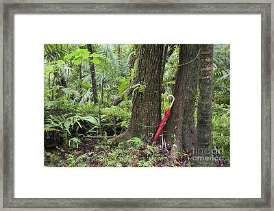 Framed Print featuring the photograph Red Umbrella Leaning Against Tree In Rainforest by Bryan Mullennix