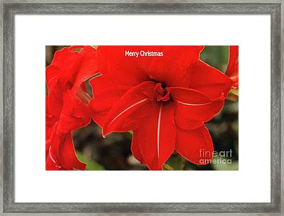 Red Velvet Framed Print by Kathleen Struckle