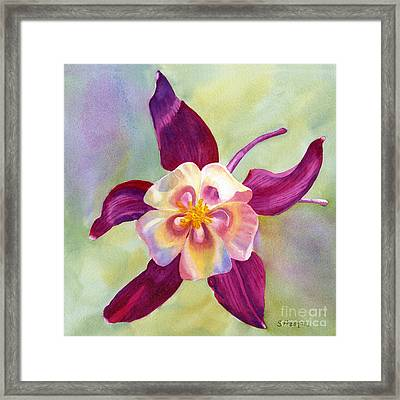 Red Violet Columbine With Background Framed Print by Sharon Freeman