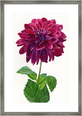 Red Violet Dahlia Blossom Framed Print by Sharon Freeman