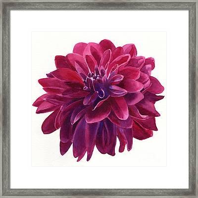 Red Violet Dahlia Square Design Framed Print by Sharon Freeman