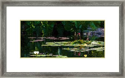 Red Water Lily In A Tropical Pond Framed Print by Julio Solar