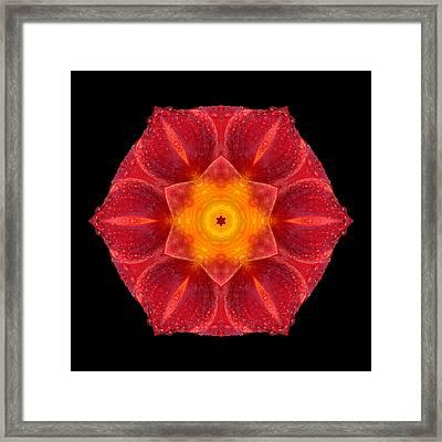 Red Wet Lily Flower Mandala Framed Print by David J Bookbinder