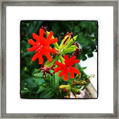 Red Wheels Framed Print