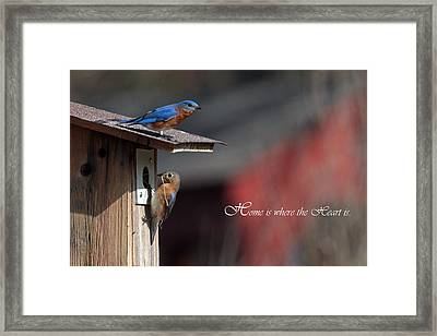 Red White And Blue Birds Framed Print by Michael Rucci