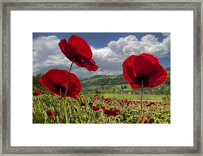 Red White And Blue Framed Print by Debra and Dave Vanderlaan