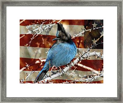 Red White And Blue Framed Print by Donna Kennedy