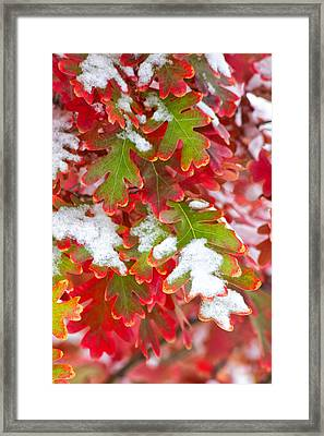 Red White And Green Framed Print