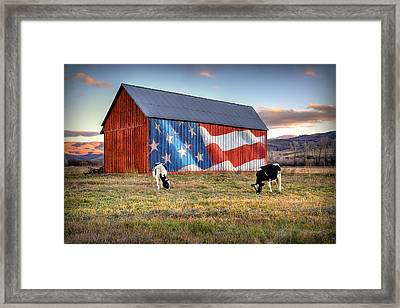 Red White And Moo Framed Print