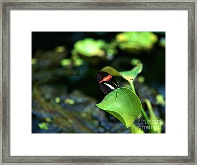 Red White Black Butterfly Framed Print