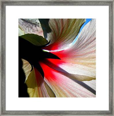 Red White N Black Framed Print